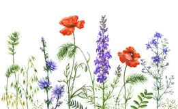 Watercolor wild flowers border Royalty Free Stock Images