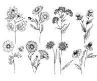 Hand drawn wild hay flowers. Medical herbs and plant. Calendula, Chamomile, Cornflower, Celandine, Cosmos, Yarrow. Hand drawn wild hay flowers. Medical herbs and Royalty Free Stock Photos
