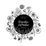 Hand drawn wild hay flowers. Medical herbs and plants. Calendula, Chamomile, Cornflower, Celandine, Cosmos, Yarrow. Thistle, Echinacea. Engraved Cosmetic Royalty Free Stock Images