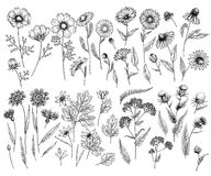 Hand drawn wild hay flowers. Medical herbs and plant. Calendula, Chamomile, Cornflower, Celandine, Cosmos, Yarrow. Hand drawn wild hay flowers. Medical herbs and Royalty Free Stock Photo