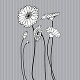 Hand drawn wildflower. On grey background Stock Photography