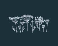 Hand drawn wildflower Stock Photo