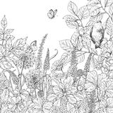 Hand drawn wildflowers, butterflies and bird. Hand drawn floral elements. Black and white flowers, plants, butterflies and sitting bird on branch. Monochrome Royalty Free Stock Photo