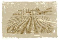 Hand drawn wineyard Stock Photography