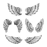 Hand drawn wing. Sketch angel wings with feathers. Vector tattoo design isolated. Angel wing tattoo, bird feather sketch drawn illustration Vector Illustration