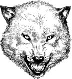 Hand drawn wolf head Royalty Free Stock Image