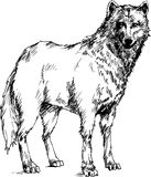 Hand drawn wolf Royalty Free Stock Image