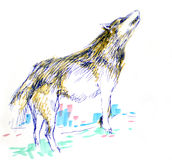 Hand drawn wolf  Royalty Free Stock Photography