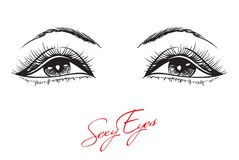 Hand-drawn woman`s makeup. Look with perfectly perfectly shaped eyebrows and extra full lashes. Perfect salon look. Eyelashes vector illustration