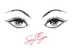 Hand-drawn woman`s makeup. Look with perfectly perfectly shaped eyebrows and extra full lashes. Perfect salon look. Eyelashes royalty free illustration