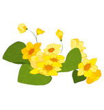 Hand drawn yellow blooms. Hand drawn illustration of yellow blooms flowers isolated on white Royalty Free Stock Photos