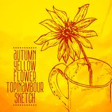 Hand drawn yellow flower topinambour sketch Stock Photography