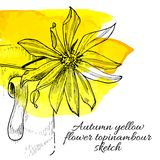 Hand drawn yellow flower topinambour sketch Stock Photo