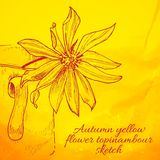 Hand drawn yellow flower topinambour sketch Royalty Free Stock Photo