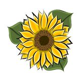 Hand drawn yellow sunflower. Vector Stock Photography
