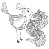 Hand drawn zentangle tribal Exotic Bird and Hibiskus flower for Royalty Free Stock Image