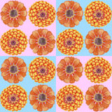 Hand-drawn zinnia pattern. Gentle seamless pattern with zinnia flowers Stock Image