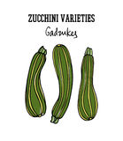 Hand drawn zucchini Royalty Free Stock Photos