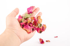 Hand with dried rose petals royalty free stock images