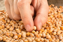 Hand with dried yellow peas Stock Photos