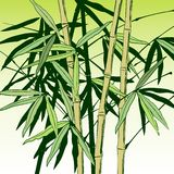 Hand drog bambustammar med sidor vektor illustrationer