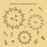 Hand drog blom- beståndsdelar för tappning Royaltyfri Illustrationer
