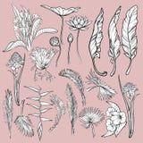 Hand drog blommor och sidor av tropiska växter Blom- uppsättning för grafisk stil som isoleras på rosa bakgrund Lotus Heliconia Arkivfoto