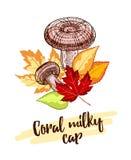 Hand drog Coral Milky Cap stock illustrationer