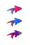 Hand-drog färgpulver-stiliserade små akvariefiskar Arkivbild