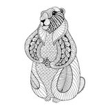 Hand drog Groundhog för vuxna färgläggningsidor i klotter royaltyfri illustrationer