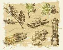 hand drog kryddor Royaltyfria Foton