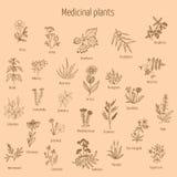 Hand drog medicinska örter och växter Stock Illustrationer