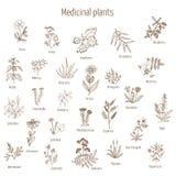 Hand drog medicinska örter och växter royaltyfri illustrationer