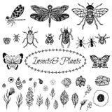 Hand drog sidor för växt för vektorzentanglesvart stock illustrationer