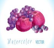 Hand drog vattenfärgäpplen, druvor Arkivbilder