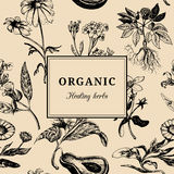 Hand drog vektorörter Organisk läka växtbakgrund Kort eller affisch för tappning blom- stock illustrationer