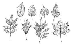 Hand drog vektorillustrationer Uppsättning av nedgångsidor Skogdesi Arkivbilder