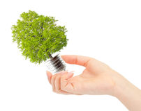 Hand and eco bulb. Hand holds green tree in light bulb. Alternative energy concept Stock Photos