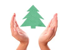 Hand with ecology Christmas-tree Stock Photography