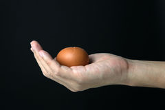 Hand with egg Stock Images