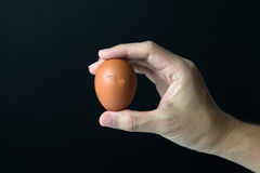 Hand with egg Stock Image