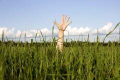 Hand in einem Gras Lizenzfreie Stockfotografie