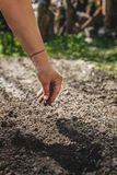 The hand of an elderly woman pours the earth on sowing. The concept of gardening, life on earth, style.  stock photos