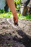 The hand of an elderly woman pours the earth on sowing. The concept of gardening, life on earth, style.  royalty free stock images