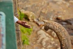 Hand en boomstam stock afbeeldingen