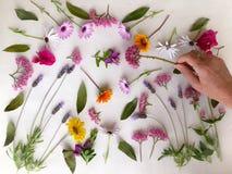 Hand en de Kleurrijke natuurlijke achtergrond van de lentebloemen op wit stock afbeeldingen