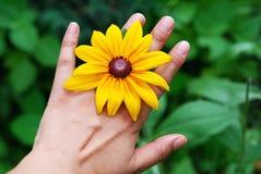 Hand en gele madeliefjes Stock Afbeeldingen