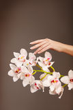 Hand en orchidee Royalty-vrije Stock Foto