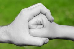 Hand encircles fist. Adult hand encircles a younger person's extended fist. Hands and arms are in black and white, isolated on a background of green outdoor royalty free stock images