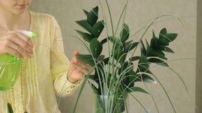Hand för kvinna` som s besprutar den gröna växten lager videofilmer